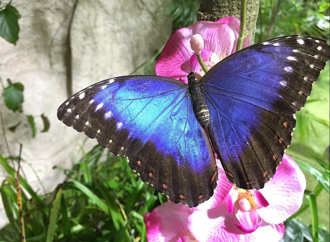 Da San Valentino, a Palermo, la casa delle farfalle
